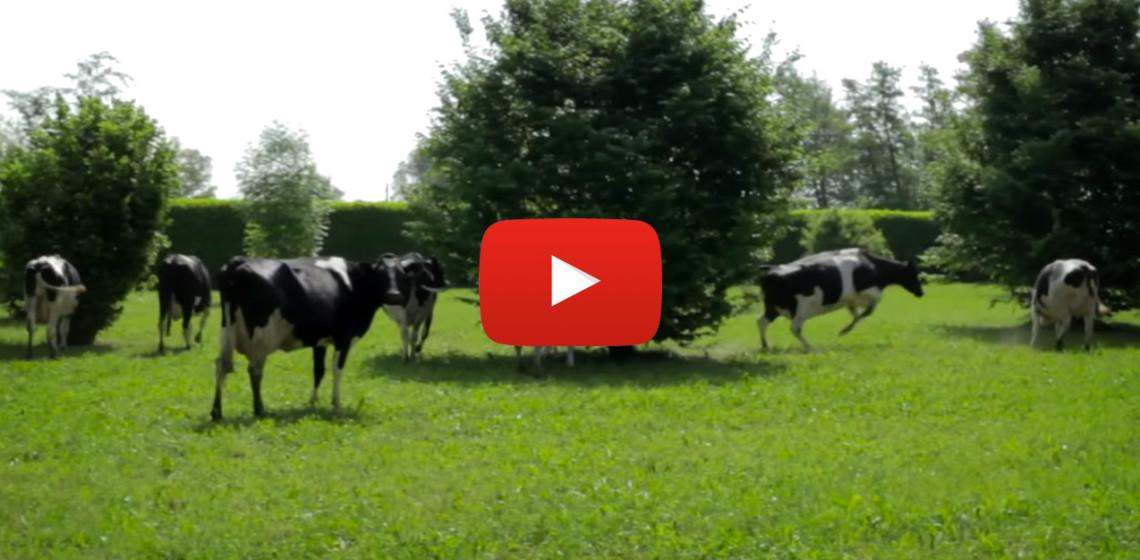 Blog_Voltarpagina_Cascina-Isola-Maria_agricoltura-biologica_agriturismo