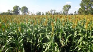 Cascina-Isola-Maria_agricoltura-biologica_agriturismo_BB_galleria02