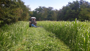 Cascina-Isola-Maria_agricoltura-biologica_agriturismo_BB_galleria03
