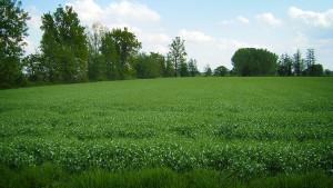 Cascina-Isola-Maria_agricoltura-biologica_agriturismo_BB_galleria04