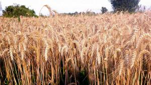 Cascina-Isola-Maria_agricoltura-biologica_agriturismo_BB_galleria05